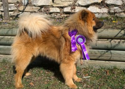 CACIB Celje 2017 Winter Winner
