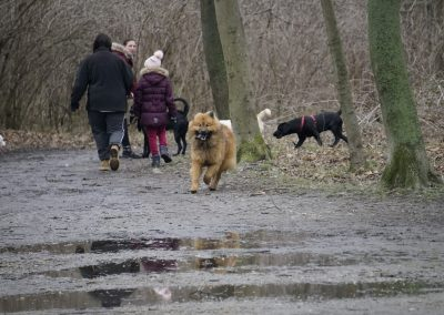 Hundewiese